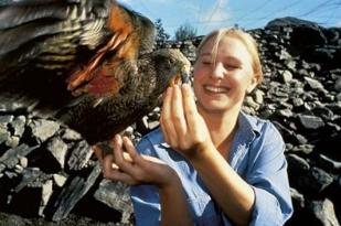 新西兰南岛-柳岸野生动物保护地(Willowbank Wildlife Reserve)