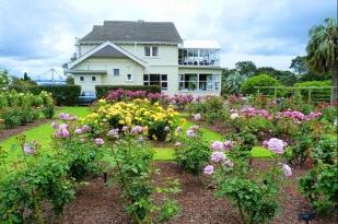 新西兰北岛-玫瑰花园 (Parnell Rose Gardens)