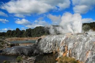 新西兰北岛-库瑞公园(Kuiral Park)