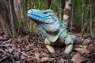 新西兰北岛-卡罗里野生动物保护区 (Karori Wildlife Sanctuary)