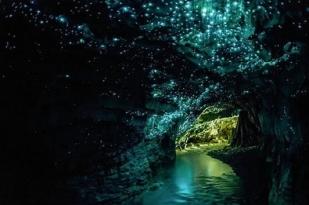 新西兰南岛查尔斯顿萤火虫洞之旅(Gloworm Cave Tour)