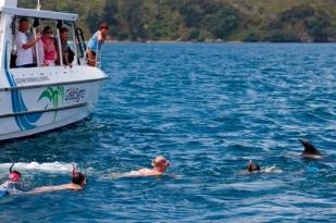 新西兰北岛海豚生态游