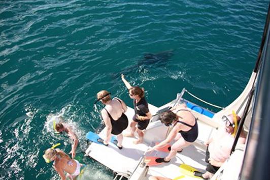 新西兰北岛-岛屿湾邂逅海豚