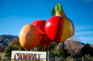 新西兰南岛-克伦威尔水果小镇 (Cromwell)