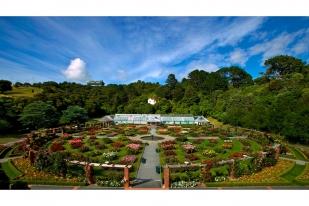 新西兰北岛-惠灵顿植物园(Wellington Botanic Garden)