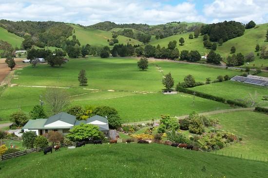 新西兰北岛-怀普阿森林(Waima Forest)