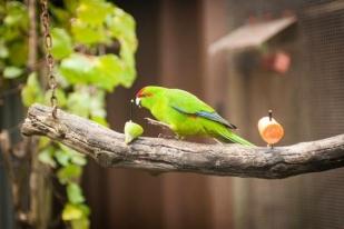 新西兰北岛-马努自然保护区(Nga Manu Nature Reserve)